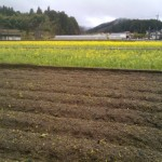 ジャガイモ・・・雨天中止